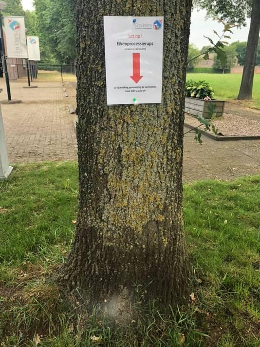 Karin Smulders van Smulders Diervoeders in Wijbosch waarschuwde voor de processierups in bomen langs Loosbraak in Wijbosch.