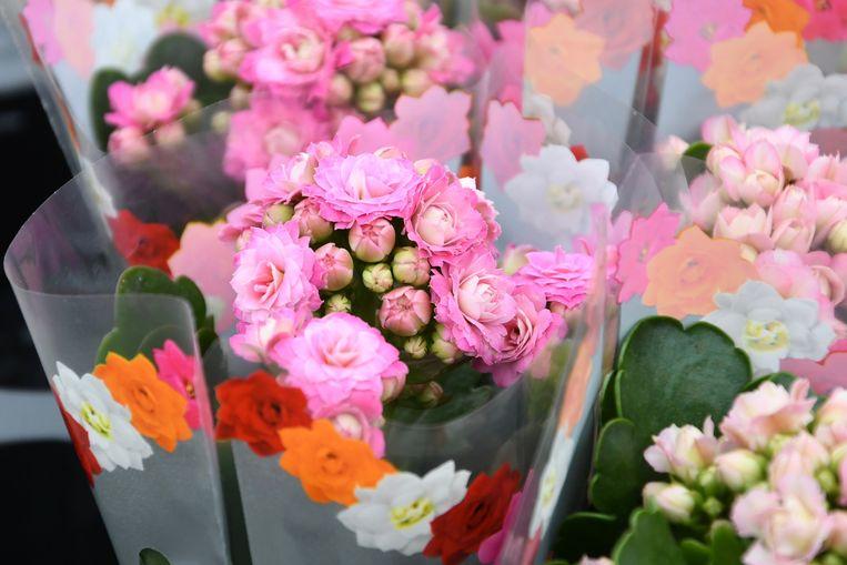 Bloemist Franky Claerebout werkt voor moederdag samen met Hen & Haan in Lauwe - dit zijn de bloemen die de moeders krijgen bij het moederdagmenu