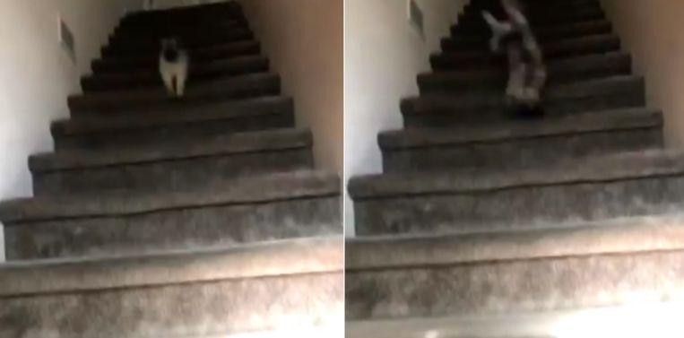 Het hondje was zo enthousiast om zijn baasje te begroeten dat het over de kop ging en het laatste stuk van de trap afrolde.