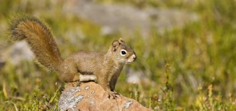"""Il donnait de la drogue à son écureuil pour en faire un """"animal d'attaque"""""""