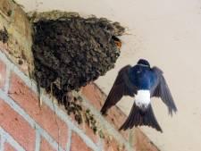 Vogels en vleermuizen gaan muggen te lijf