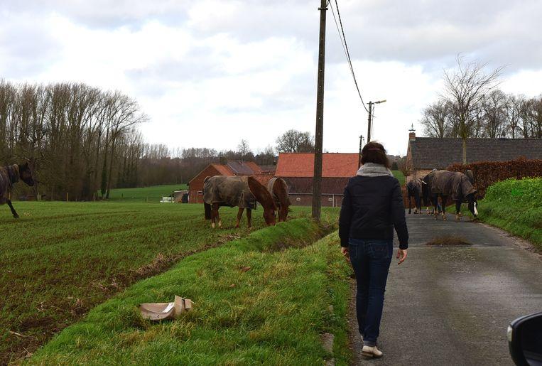 Vrijwilligers kwamen meehelpen om de paarden in veiligheid te brengen