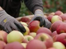 Waarom deze appel alleen bij Albert Heijn te koop is