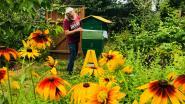 """Lentehoning uit Mijlbeekbos: """"Opbrengst gaat naar de bijen en Natuurpunt"""""""