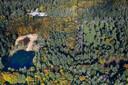 Het hertenkamp (rechts) en de vijver aan de Dellenweg in Epe.