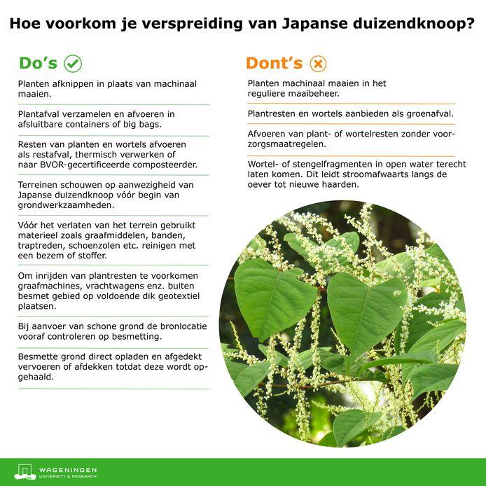 Tips van Wageningen Universiteit om verspreiding van de bijna onuitroeibare Japanse duizendknoop tegen te gaan.