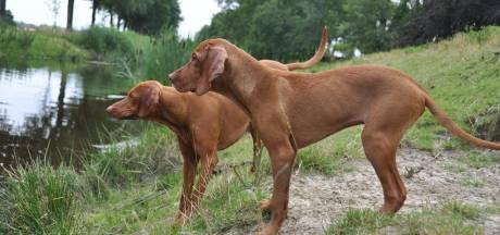 Honden en katten mogelijk vergiftigd in Goirle met naar frituurvet ruikende substantie