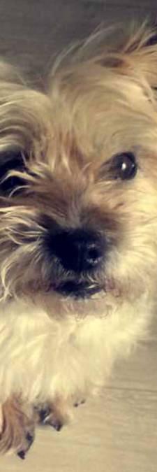 Hond dood bij aanrijding, scooterrijder rijdt door: 'Hij moet iets gemerkt hebben'