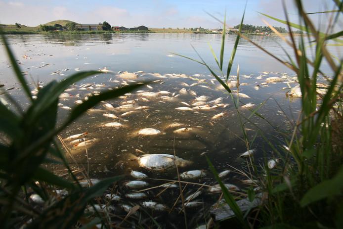 Duizenden dode vissen drijven maandag op de Gaatkensplas in Barendrecht.