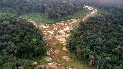 Ontbossing Amazonewoud: dit jaar al 280 vierkante kilometer gerooid