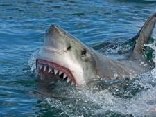 Surfer (60) komt om na aanval haai voor kust Australië