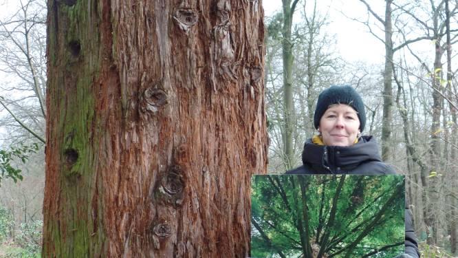 Evy uit Ursel wint fotowedstrijd rond monumentale bomen in het Meetjesland: kiekje genomen in Het Leen