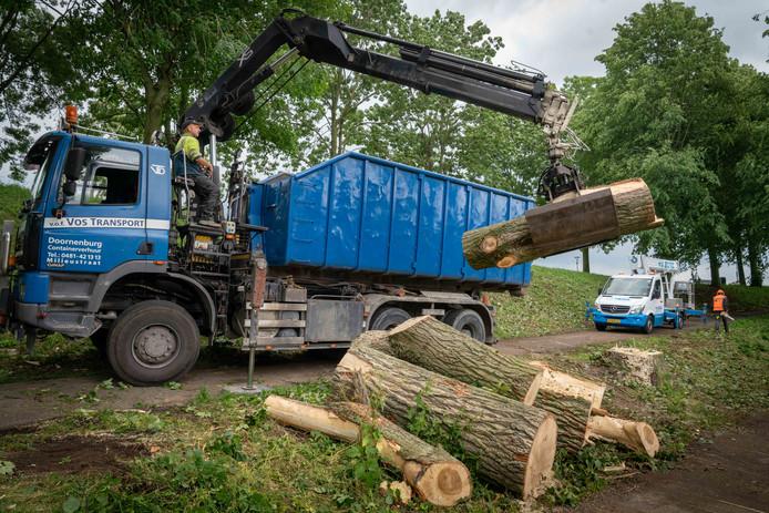 Omgevallen bomen aan Zuideinde zijn al in stukken gezaagd. Foto: Erik van 't Hullenaar.
