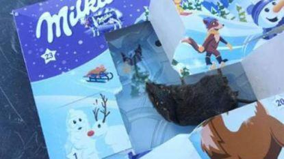 Peuter vindt dode muis in adventskalender