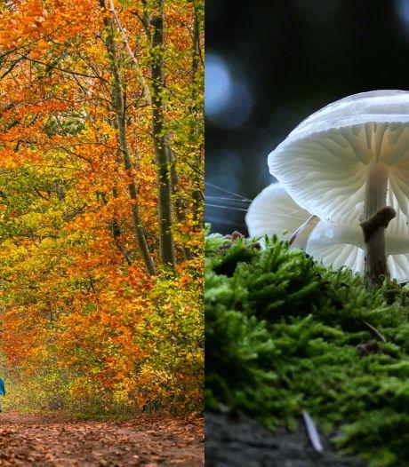 OPROEP | Mooie herfstfoto gemaakt? Laat 'm hier zien!
