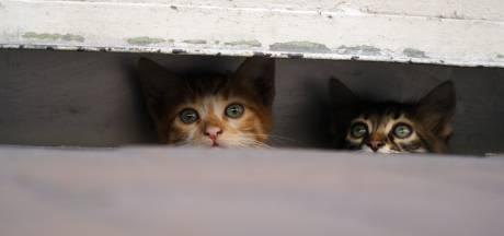 Politie redt verwaarloosde kat en kitten van heet balkon in Zwolle