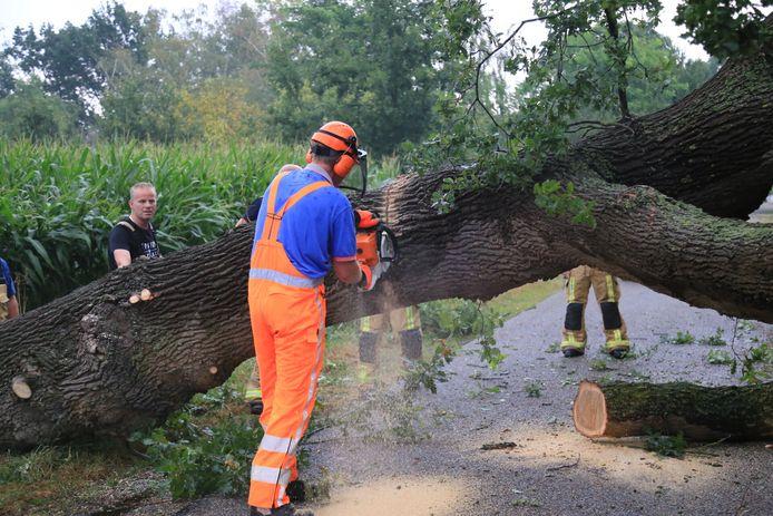 Grote boom omgewaaid in De Mortel