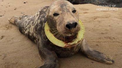 Zeehond met frisbee om de nek van de dood gered