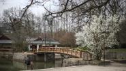 Eerste bloesems in Japanse tuin