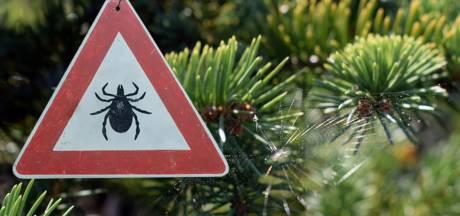 In de kerstboom leven wel 25.000 beestjes: 'Ze worden wakker als de boom binnen staat'