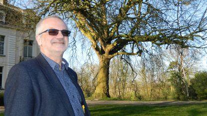 Plataan van Wippelgem nipt niet de mooiste boom van ons land