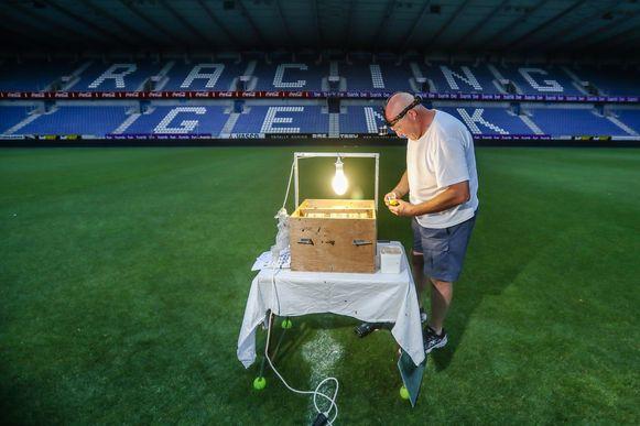 Stefan Meesen telt de nachtvlinders in het stadion van KRC Genk.