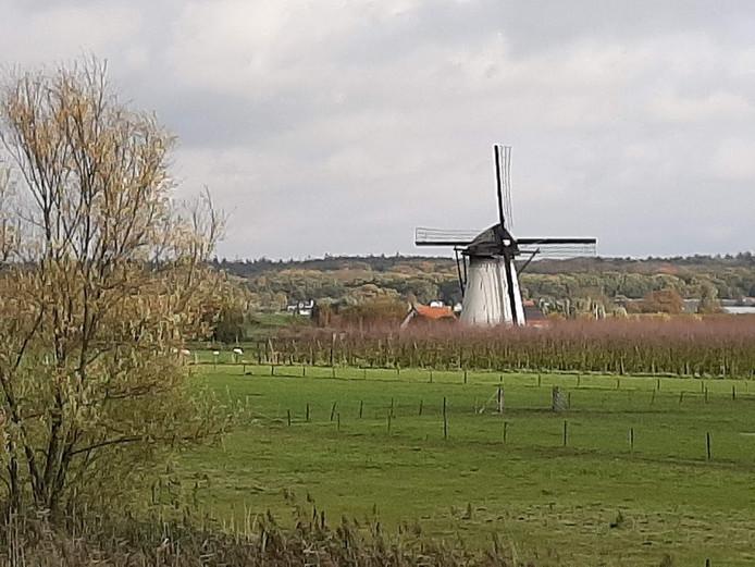 Ook molen De Marsch, net buiten Lienden, is nog tot 17.00 uur te bezoeken.