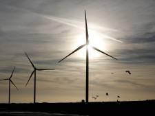 Leefbaar verontwaardigd over windmolenplannen: 'Onrendabele horizonvervuilers die vleermuizen tot pulp malen'