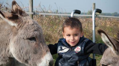Kankeronderzoeker Johan Swinnen zet z'n schouders onder ezeltherapie