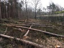 PvdD wil opheldering over Apeldoornse bomenkap