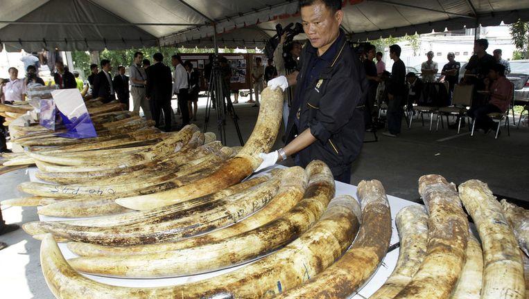 De lading ivoor die vandaag in Thailand werd onderschept. Beeld ap