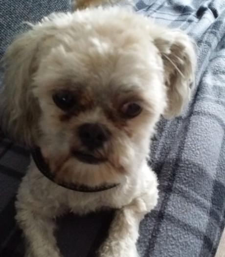Hondje doodgebeten door rottweiler: 'Iedereen was bang voor dat beest'