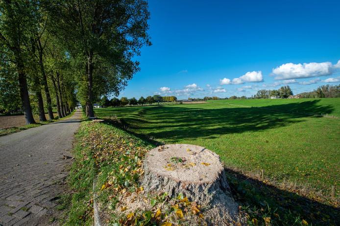 De bomenkap in Beuningen is stilgelegd.
