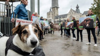 Animal Rights voert actie tegen wereldwijd fenomeen van 'trophy hunting'