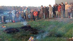 Twaalf everzwijnen gedood tijdens tweede jachtoperatie
