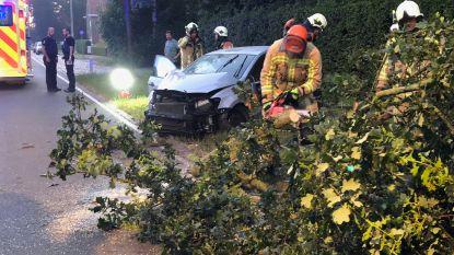 Auto raakt van de weg en knalt tegen boom in Zedelgem