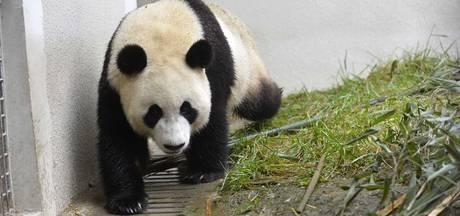 Nog week wachten op besluit pandaparkeren