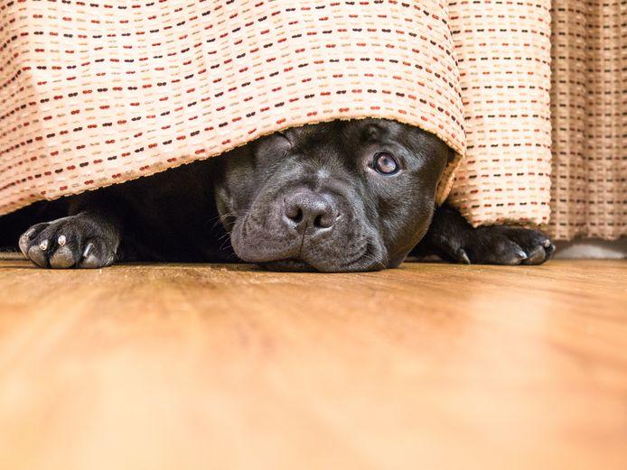 Foto ter illustratie. Er is niet bekend welk ras de honden hebben.