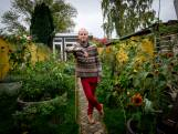 Negenhonderd rode pepers en toch gelukkig: 'In Brussel promoten ze dit soort tuinen'