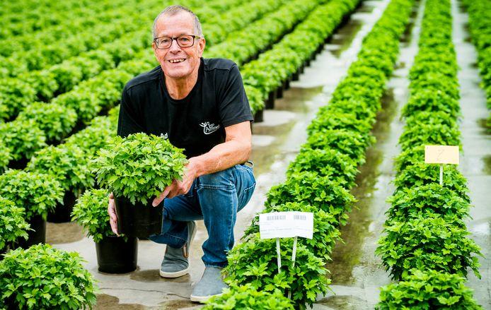 Ad van Paassen (72) werkt nog dagelijks bij een plantenkwekerij. FOTO MARCO DE SWART