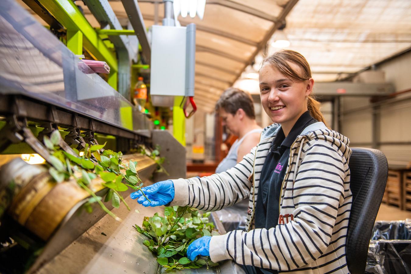 Nova Brunt werkt als vakantie baantje bij kwekerij Nolina in Woubrugge