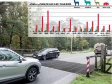 Wildaanrijdingen scherp gedaald op 'hotspot' N310 tussen Elspeet en Nunspeet