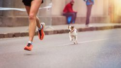 Voor deze nieuwe sporttrend heb je jouw hond nodig