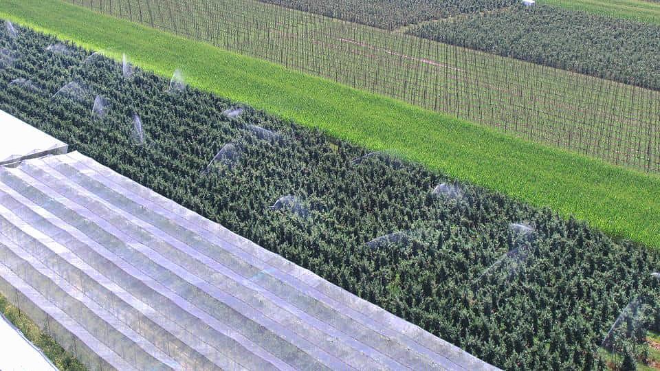 Het beeld vanuit de lucht: een tuinder besproeit zijn gewassen overdag.