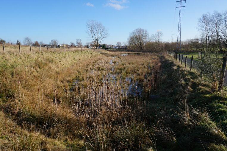 Het waterbekken maakt van een verwaarloosd terrein een prachtig natuurgebied.