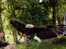Hoppa, roofvogel van 15 kilo erop en lachen naar de camera