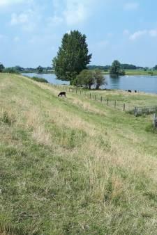Aa en Maas haalt schapen van de Maasdijken: gevaar voor erosie