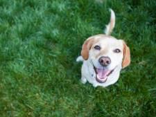 Corina zette een hulpgroep op voor huisdieren: 'Ook dieren zijn de dupe van corona'