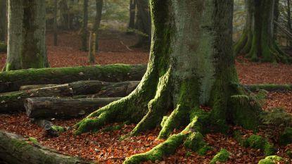 """Windmolenproject in woud zorgt voor ophef in Duitsland: """"Onbegrijpelijk dat we moeten strijden tegen de groenen om onze natuur te beschermen"""""""