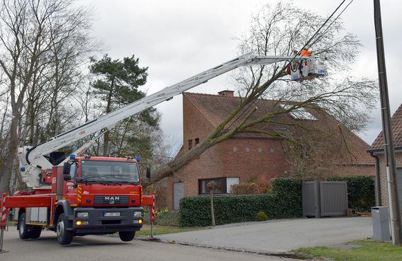 Een boom belandde in de Sint-Apollonialaan in Mol op een woning en in de elektriciteitskabels.